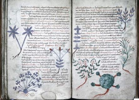 culturehearth-herbal